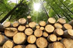 Dřevoprodukt