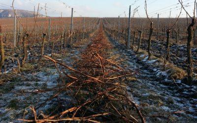 Teplo z Mikulovských vinohradů